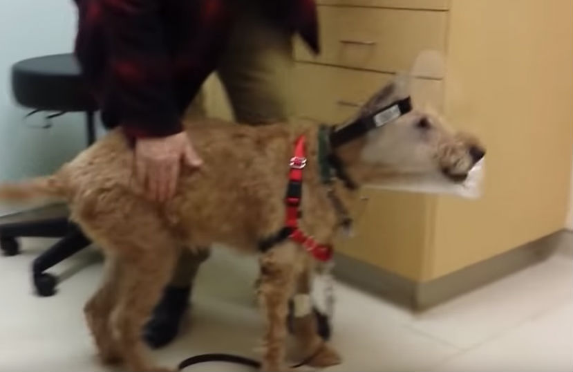 Blind Dog Finally Has Surgery To See His Reaction Has