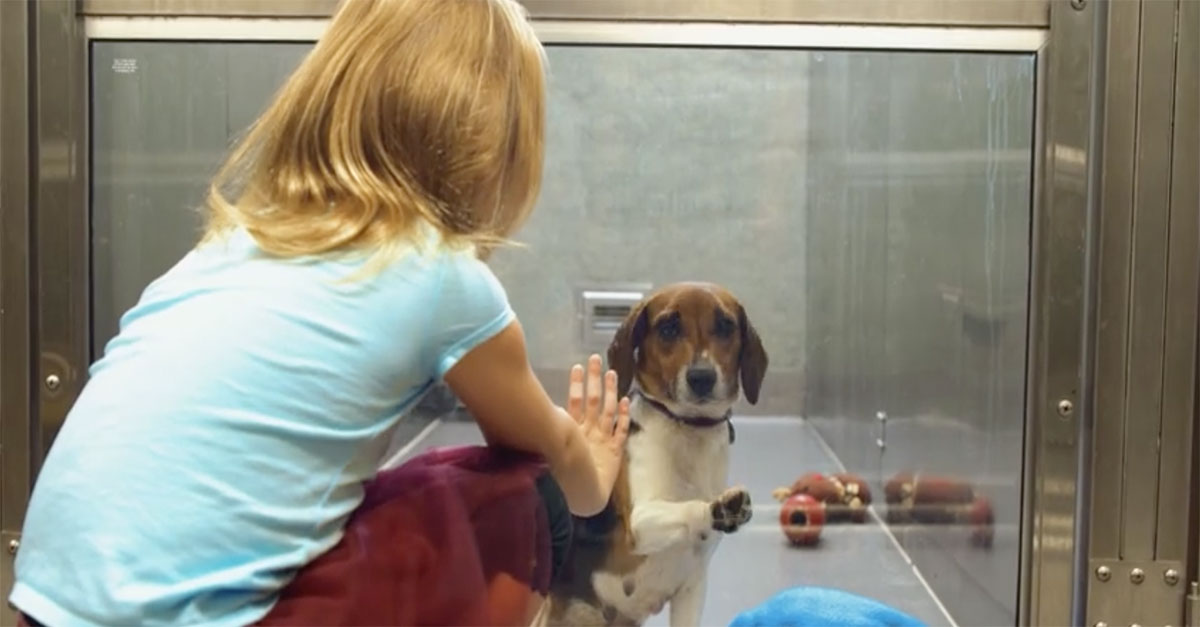 Most Inspiring Video Beagle Adorable Dog - adopt-a-dog  Picture_343818  .jpg