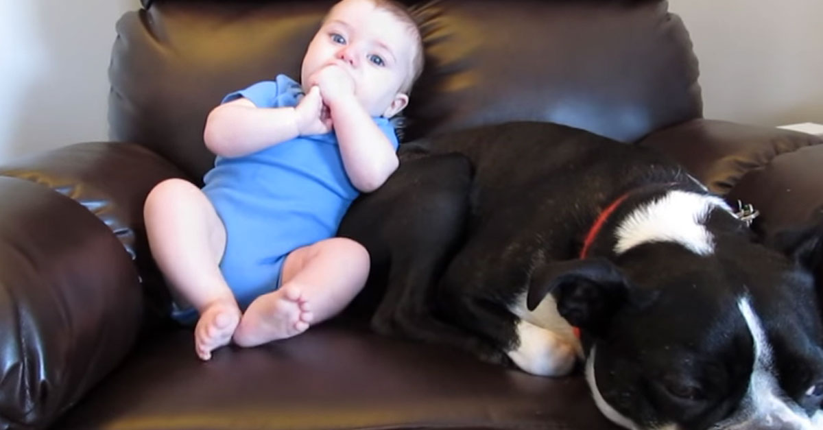 Dog Runs Away When Baby Poops and Mom Gets It All on Film