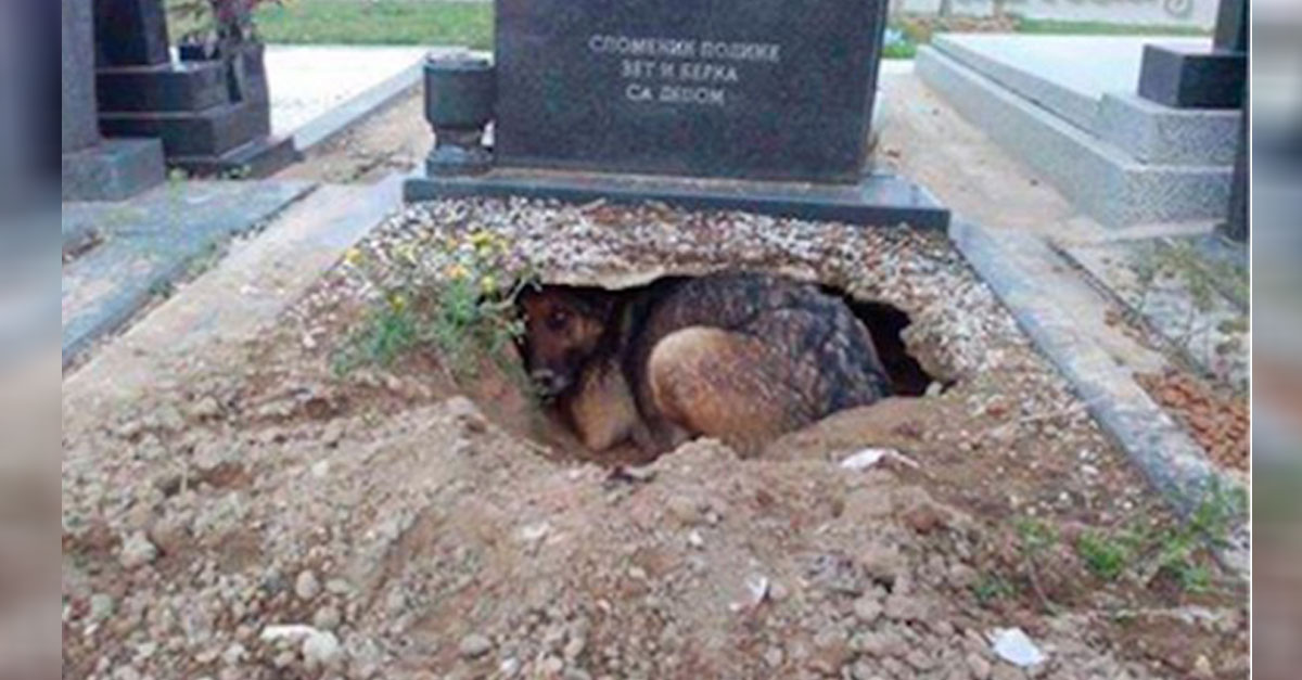 Truth Behind Viral Photo Of Dog In A Graveyard Is Revealed