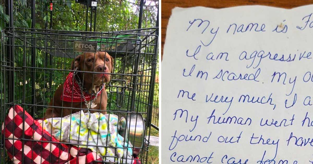 The Vet Was Confused When He Found This Pitbull Outside His Office. Then He Read The Note