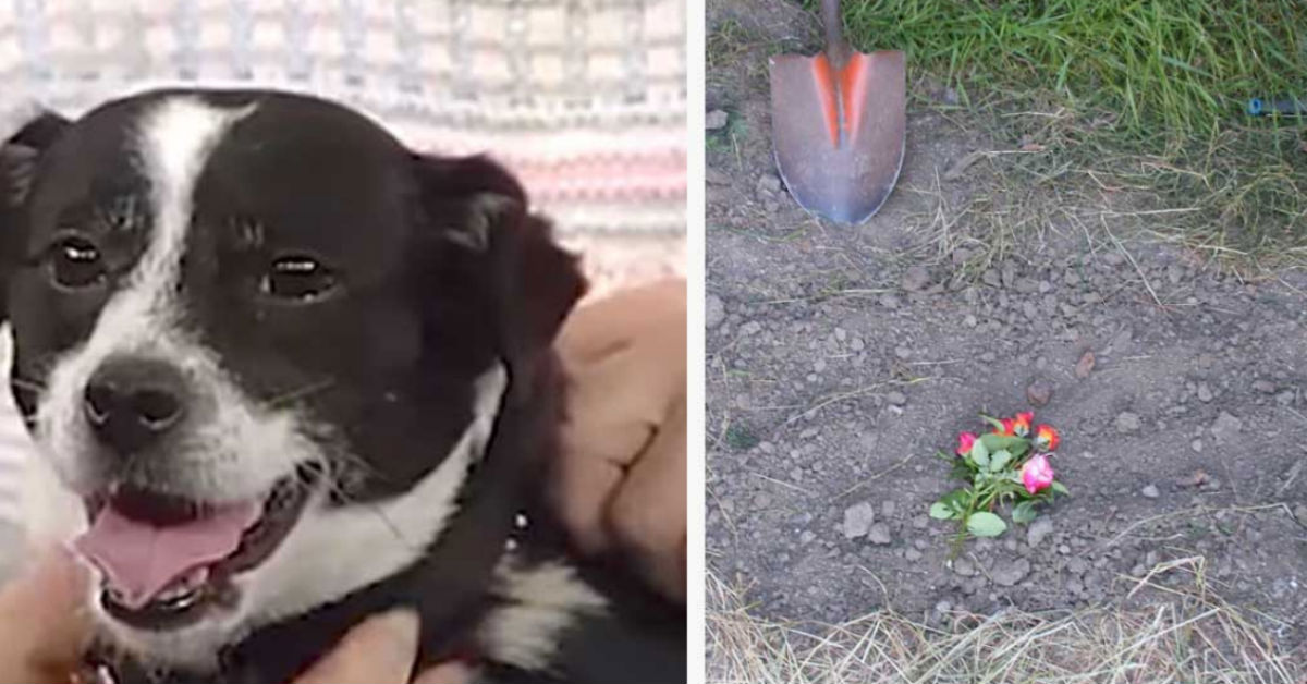 14 Hours After Family Buries Dog That Got Hit By A Car, He's
