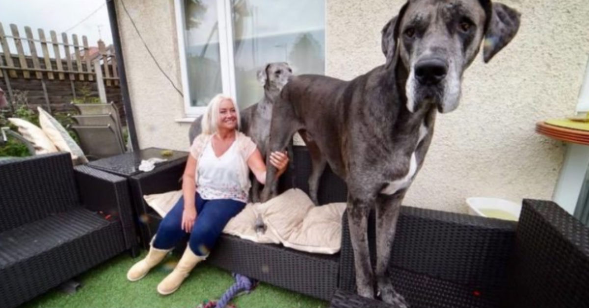 Freddy Is The Tallest Dog In The World (3 Photos)